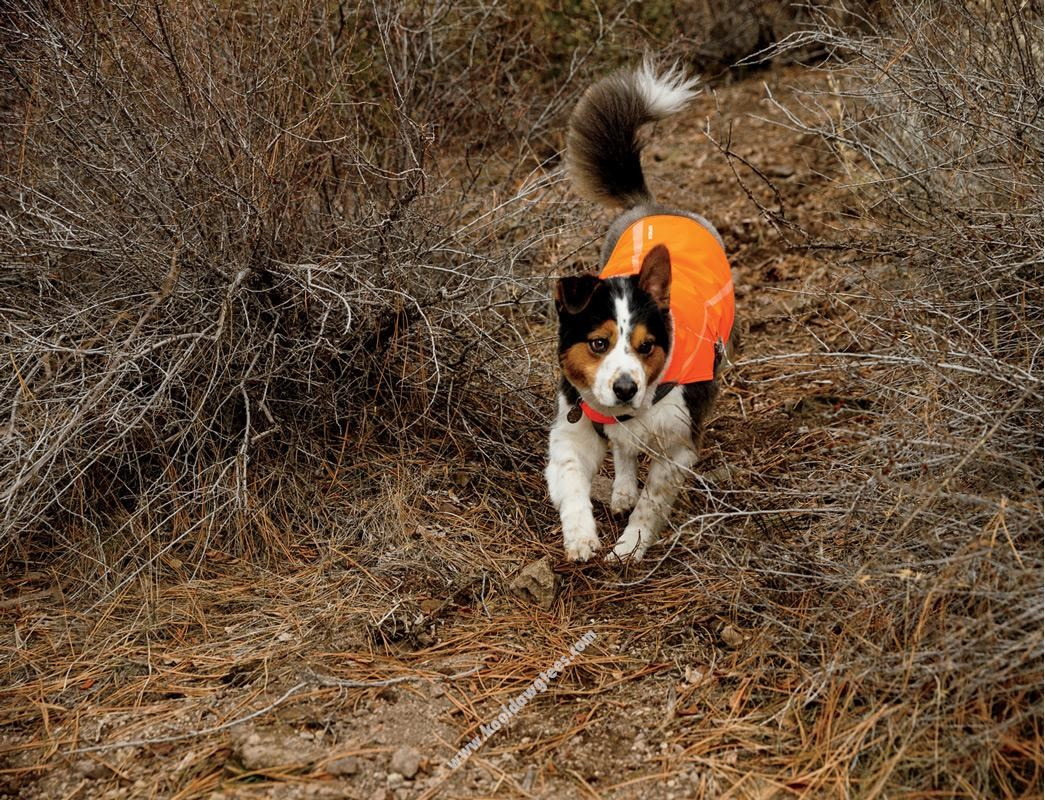 RuffWear Track Jacket High-visibility Safety jacket for dogs Blaze Orange